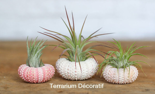 Project visual Terrariums décoratifs faits main ou en kit