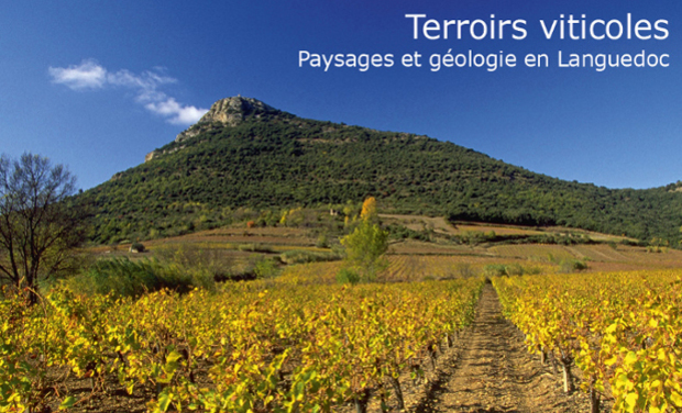 Large_terroirs-cv-2016_8avril-1460116710-1460116721