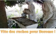 Widget_vite_des_ruche__-1474037622-1474037783