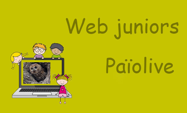 Large_web-juniors-paiolive-1457448672-1457448686