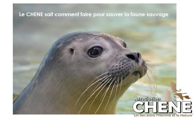 Large_1erephotochene_phrase-1458666990-1458666995