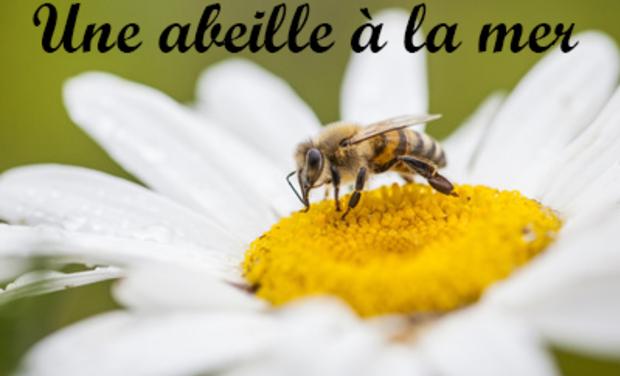 Visueel van project Une abeille à la mer