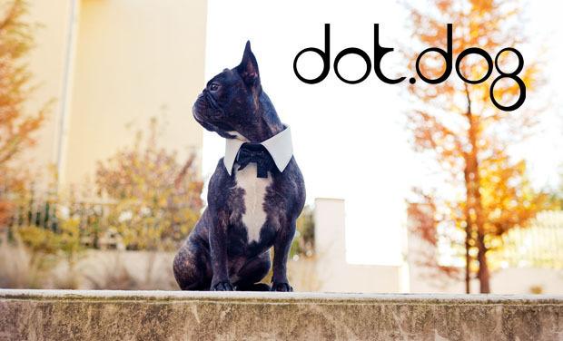 Visuel du projet Dot.Dog: Accessoires de Luxe pour animaux de compagnie