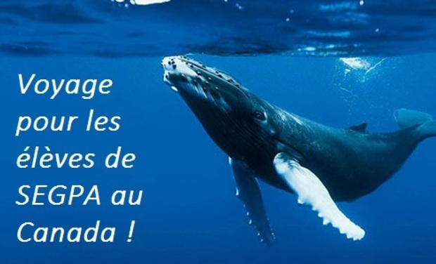 Visuel du projet Voyage scolaire : des élèves de SEGPA au pays des baleines!
