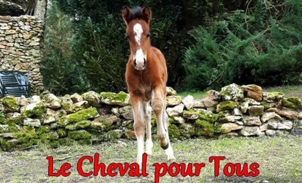 Visuel du projet Le cheval pour tous