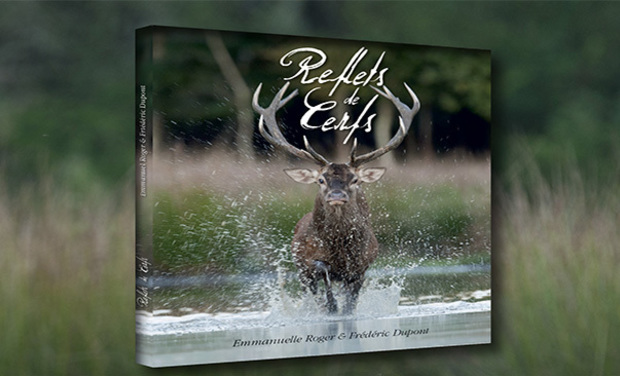 Project visual Reflets de cerfs