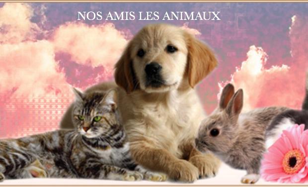 Visuel du projet Nos amis les animaux