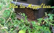 Widget_meygalbees-1472543655-1472543670