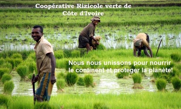 Visueel van project Aidez nous à créer la première Coopérative Rizicole Verte d'Afrique de l'Ouest