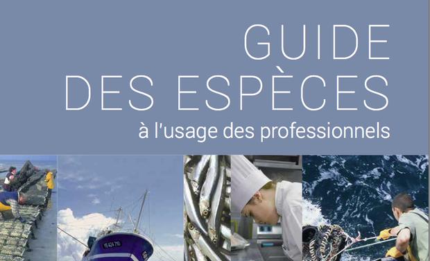 Visuel du projet Guide pour consommer du poisson durable