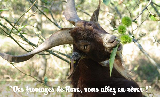 Visuel du projet Des Fromages de Rove, vous allez en Rêver !