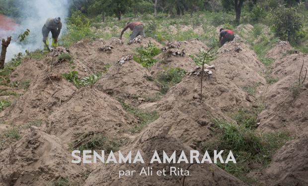Visuel du projet Senama Amaraka