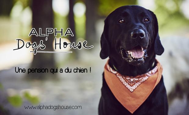 Project visual Alpha Dogs'House : une pension qui a du chien !