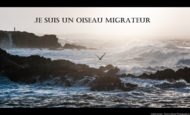 Widget_oiseaumigrateur4-1479398410-1479398445