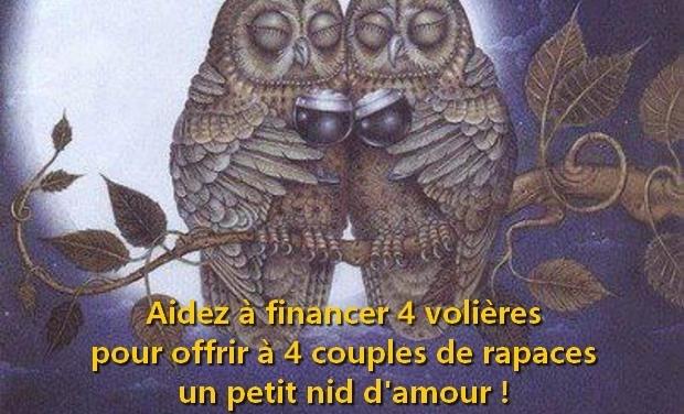 Large_chouette_brigitte_jaune-1480864036-1480864049