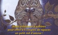 Widget_chouette_brigitte_jaune-1480864036-1480864049