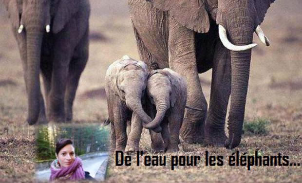Visuel du projet De l'eau pour les éléphants...