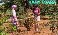 Widget_tany_tsara_2-1484841641-1484841654