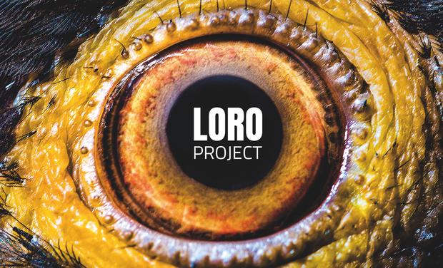 Project visual LORO PROJECT