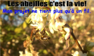 Widget_abeille-1487495000-1487495055