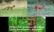 Widget_appareil_pi_ge_photo-animaux--1485436166-1485436173