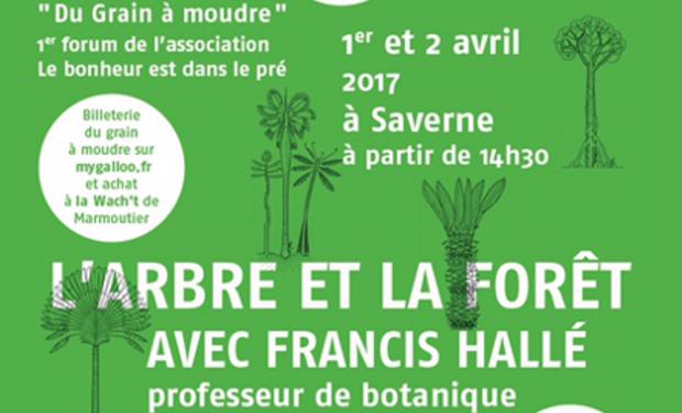 Visuel du projet Aidez nous à financer la venue de l'expert mondial de la Forêt: Francis HALLE!