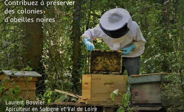Visueel van project Contribuez à préserver des colonies d'abeilles noires