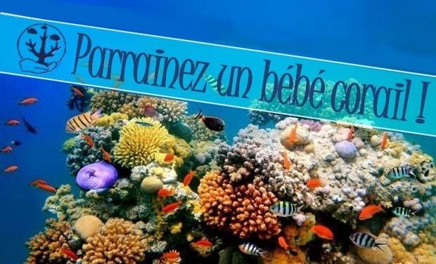 Visuel du projet Parrainez un bébé corail !