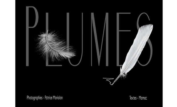 Visuel du projet PLUMES