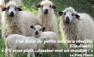 Widget_le_petit_prince-1492111228-1492111246