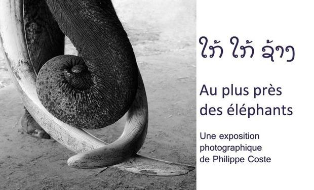 Visuel du projet Au plus près des éléphants