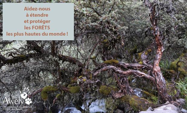 Visuel du projet Faire revivre les forêts les plus hautes du monde