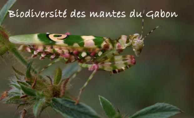 Visuel du projet Biodiversité des mantes du Gabon !