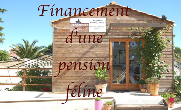 Large_pension_les_chats_en_vacances-1502301189-1502301213