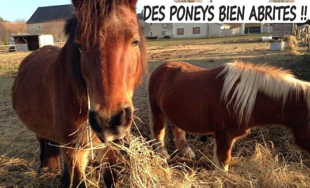 Visuel du projet Des poneys bien abrités !