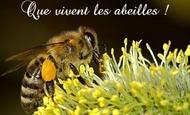 Widget_bees-18192__340_1-2-1515403476-1515403487