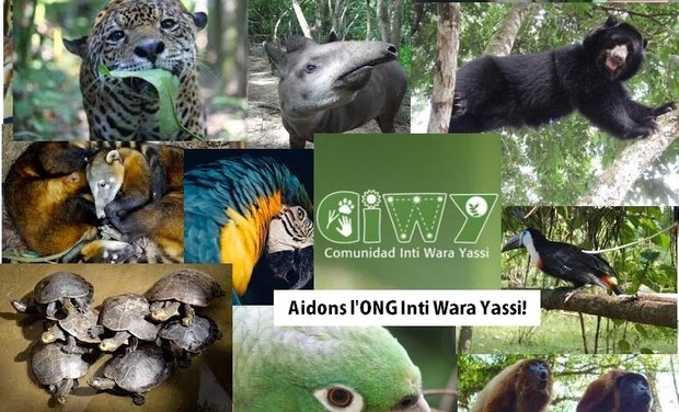 Project visual Aidons l'ONG Inti Wara Yassi!