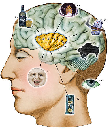 Brain_w_insula-1408379047
