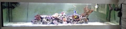Aquarium-1409773671