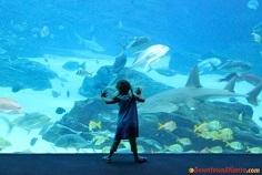 Aquarium-kids-1409865931