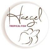 Logo_haegel-1410816970