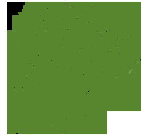 Moringa_vert-1411752252