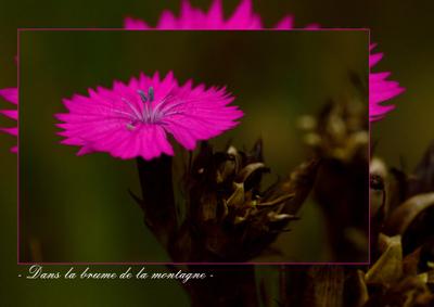 Kk-page-gauche-rose-fluo-1411916303