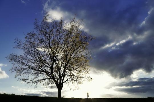 Photo_arbre_pop-1413591945
