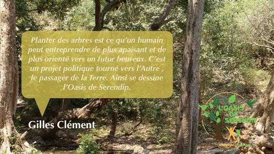 Planter-arbre-1413723341
