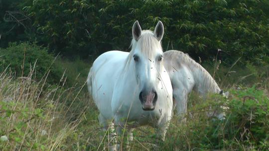 Ma_tre_cheval-1413996388