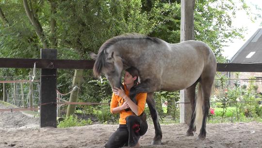 Ma_tre_cheval5-1413996632