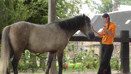 Ma_tre_cheval3-1413996867