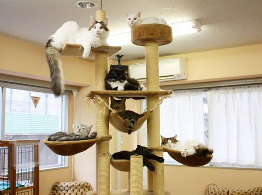 Cat-cafe-chat-japon-tokyo-3-1414779144