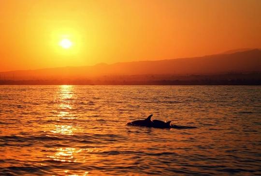 Dolphin1-1414821036